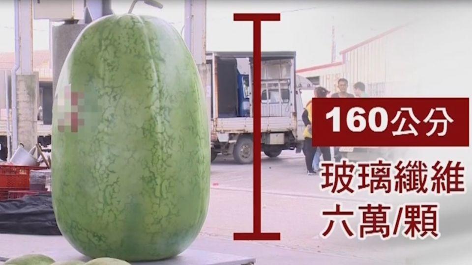 真的?假的? 160公分超級大西瓜 一顆6萬