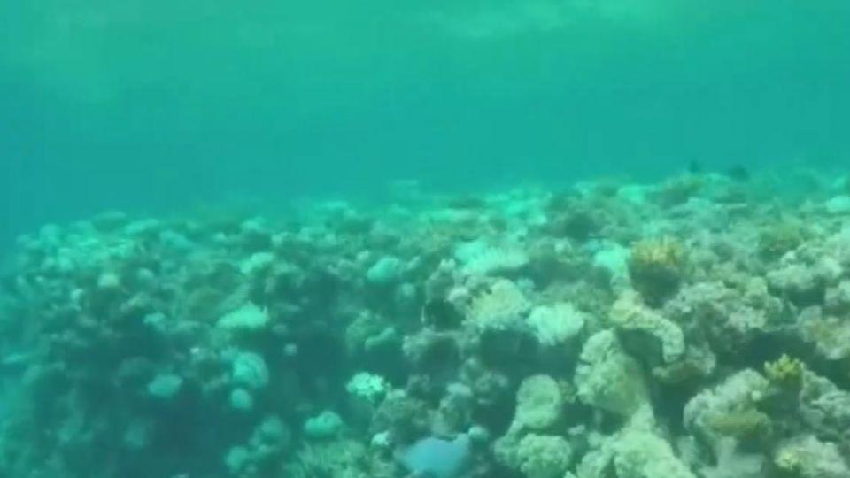 澳洲大堡礁存亡 未來5年復育成關鍵