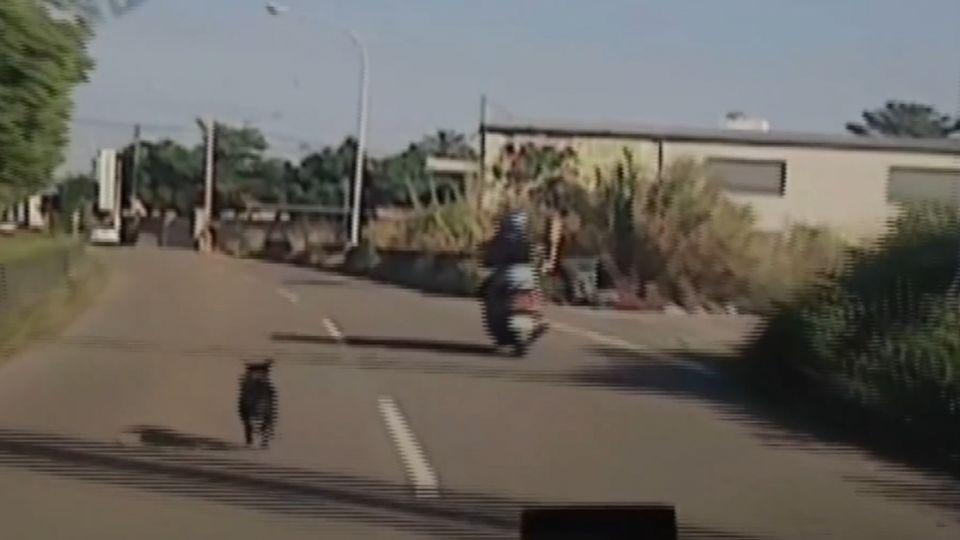 毛小孩遭棄養?小黑狗狂追白車 攀車門擋車
