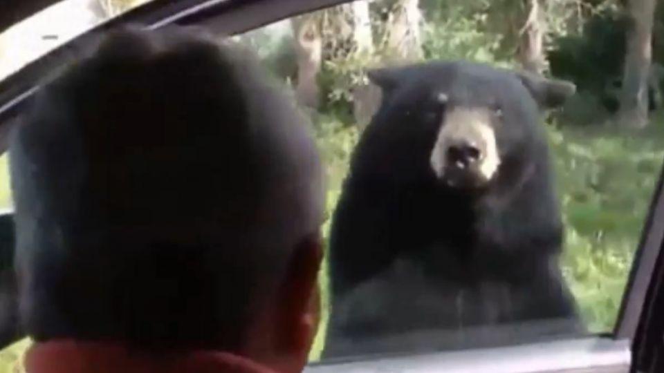 「熊會開車門!」 美民眾車門沒鎖險釀意外