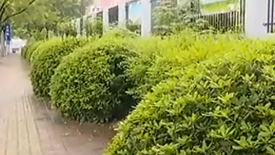 1歲女嬰燙傷身亡 父母棄屍樹叢辯是「習俗」