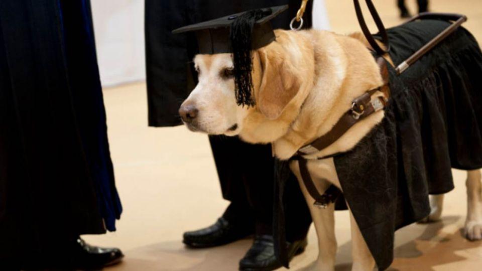 學歷最高汪星人!導盲犬Kirsch陪讀陪出碩士學位