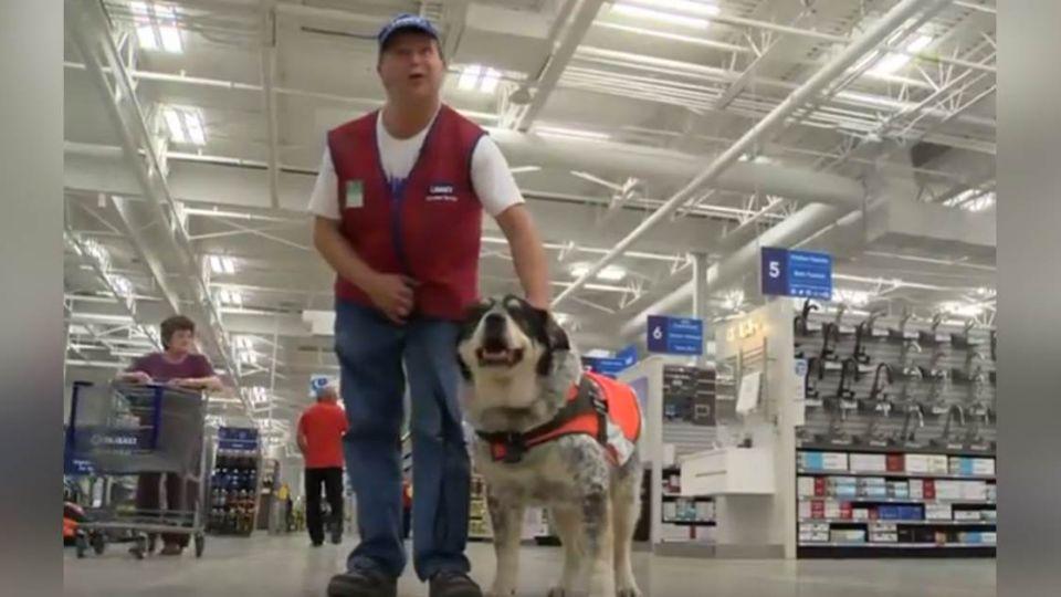 【影片】有洋蔥!賣場驚見「人+狗客服」 牠穿制服助腦傷主人