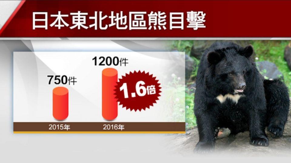 「熊出沒注意」日本秋田出現殺人熊 4人遇害!