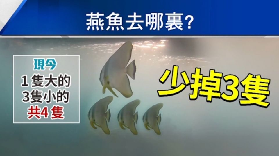 恐淪「盤中飧」! 墾丁後壁湖燕魚家族接連失蹤