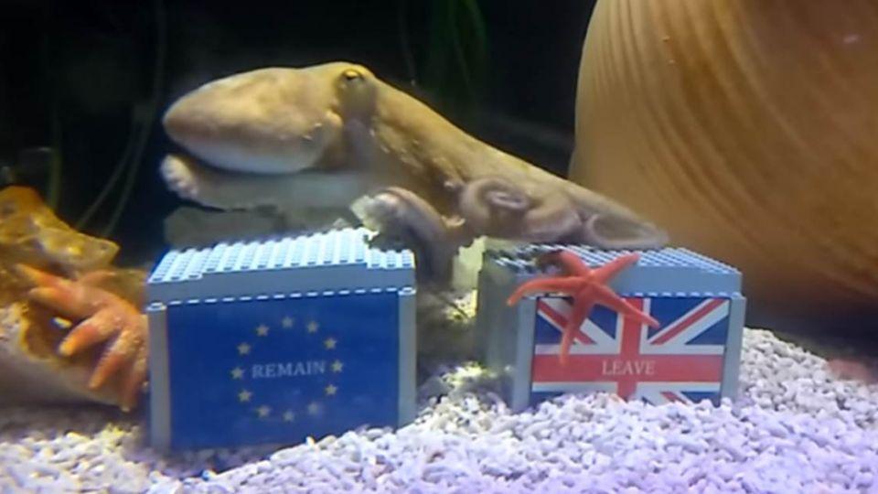 【影片】英國「脫歐」 干台灣什麼事?章魚哥水中說話了!