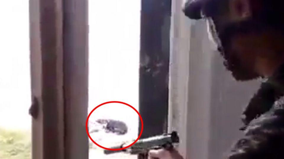【影片】被拿來BB槍「練靶子」的小黑狗 超萌模樣曝光
