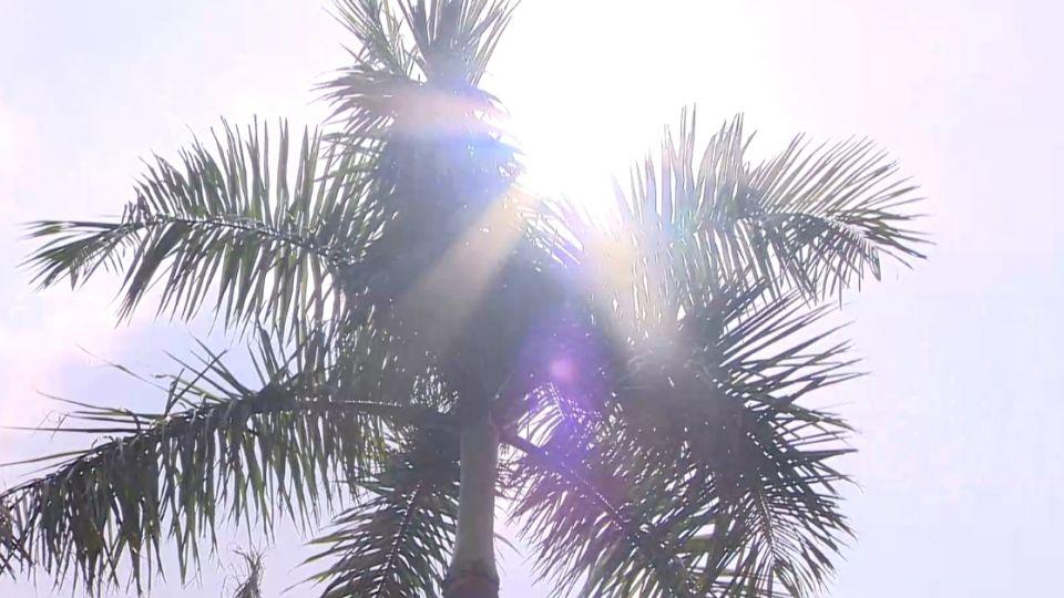 有影嘸?高溫逾35度 樹下乘涼會傷身