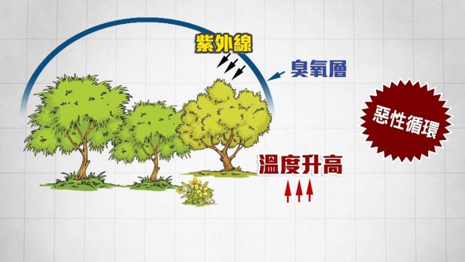 天氣太熱 避暑躲樹蔭 樹木反成破壞臭氧層幫兇?