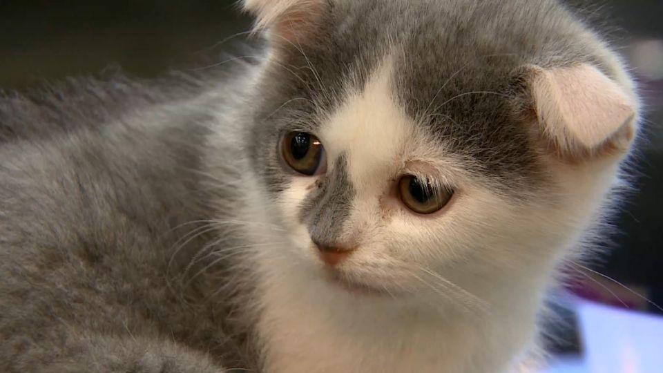 「翻牆只為見你」 癡情貓吸百萬瀏覽