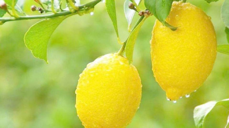 偷10顆檸檬治嘴破遭逮捕送辦 阿婆直呼:好不划算!