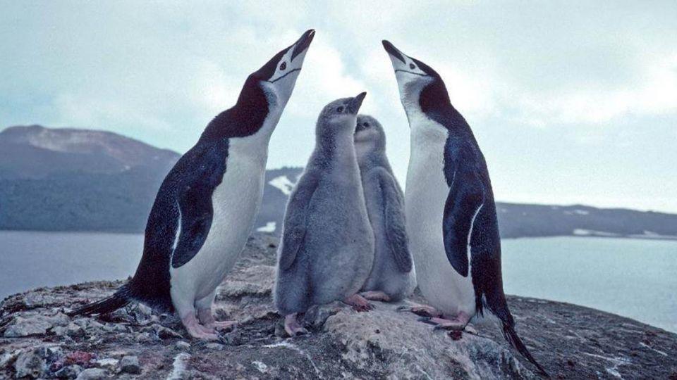 南極企鵝生存危機!火山頻噴發 灰燼覆蓋恐無棲息地
