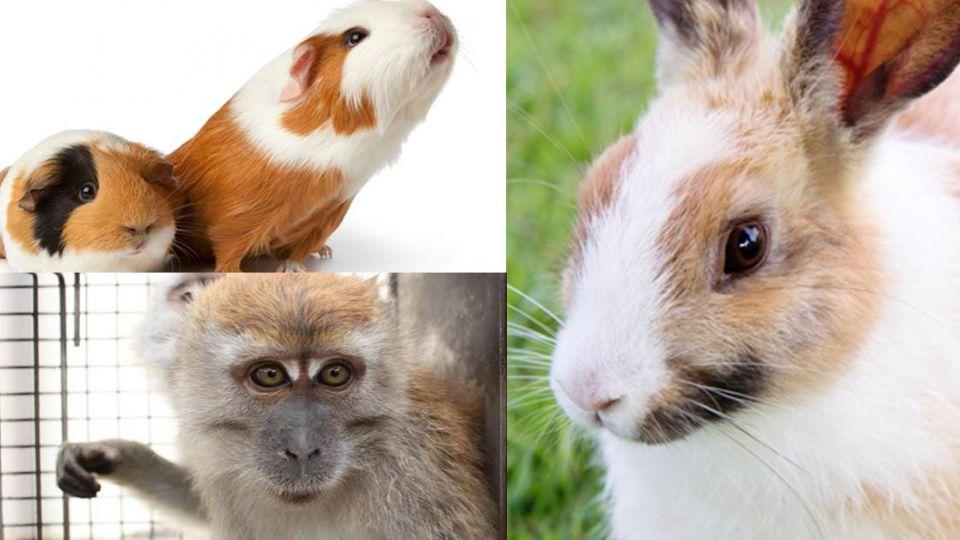 防恐攻!炸兔、毒猴、抽乾血 這國家進行殘酷動物實驗