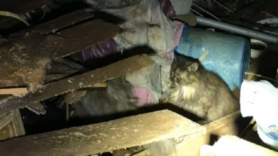 最大棄貓案! 「貓爺爺」遭爆假愛心 丟上百隻貓在工寮