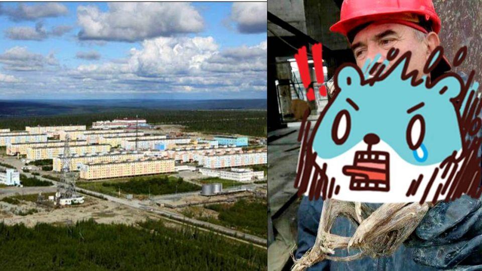 挖鑽石挖到「牠」 西伯利亞怪物乾屍出土
