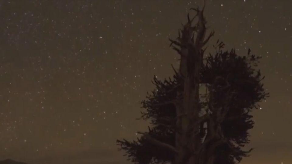地球一家親!耗時四年紀錄片一窺「驚奇生物」
