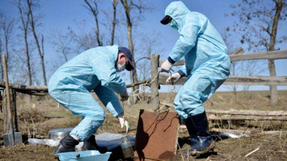 西伯利亞凍土融化 世紀病毒「天花」將死灰復燃?
