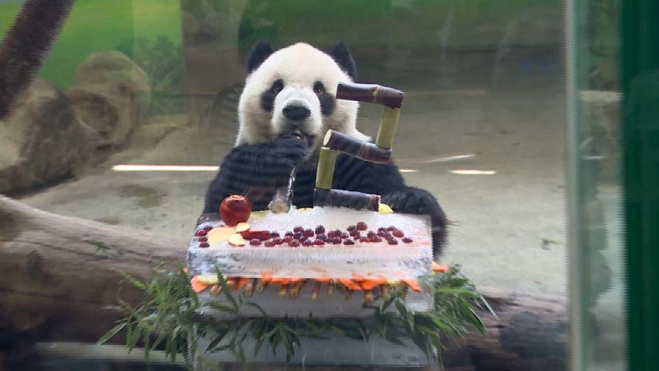 動物園特製「速食風蛋糕」 慶祝團團圓圓12歲