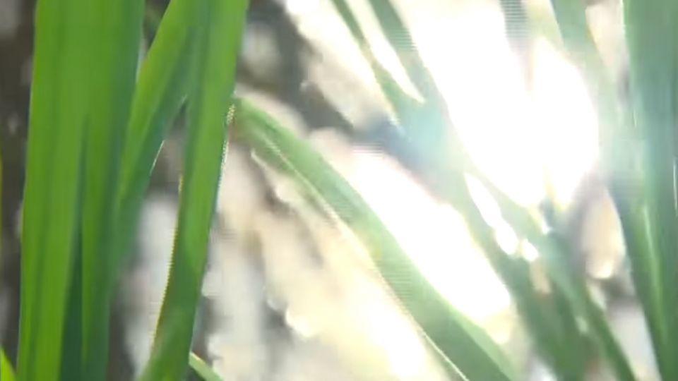 「隱藏版」重金屬污染農地 桃中彰最嚴重