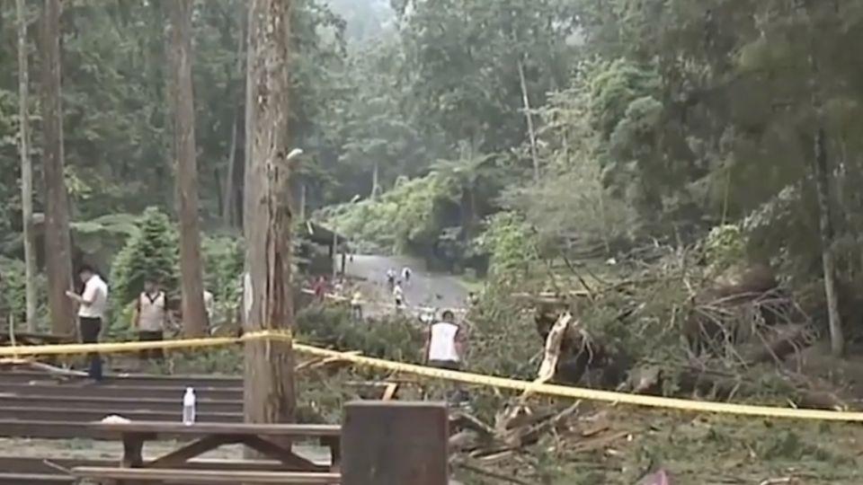 「溪頭地標」2800年神木 驚塌壓傷三遊客