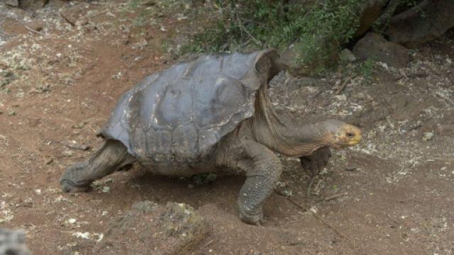 地表最強「種龜」!百歲爺生800龜孫 網:體力過人