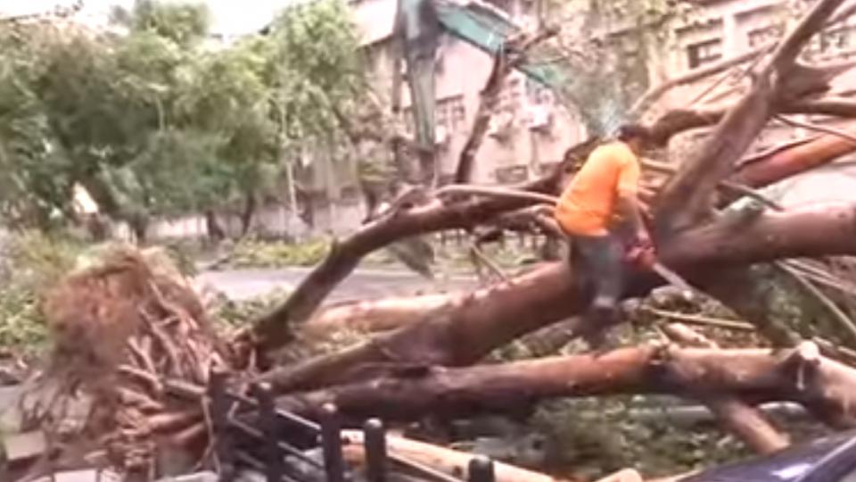 颱風天還酒駕 20歲騎士撞倒塌路樹命危