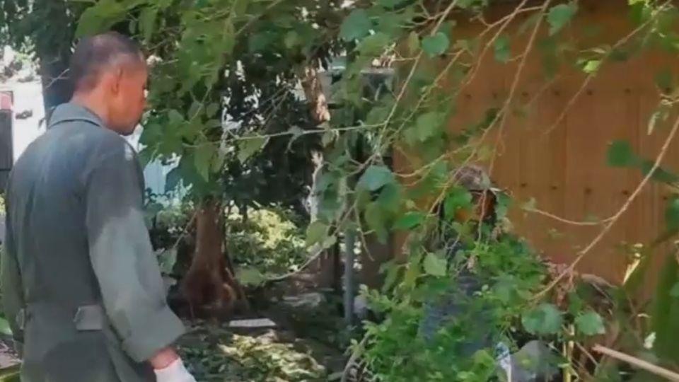 少將校長「動手」清路樹 意外引發網路論戰