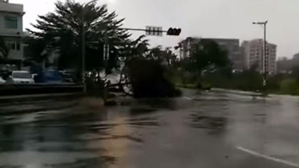 17級強風毀5百萬棵樹?! 金門縣府遭酸「敲詐」