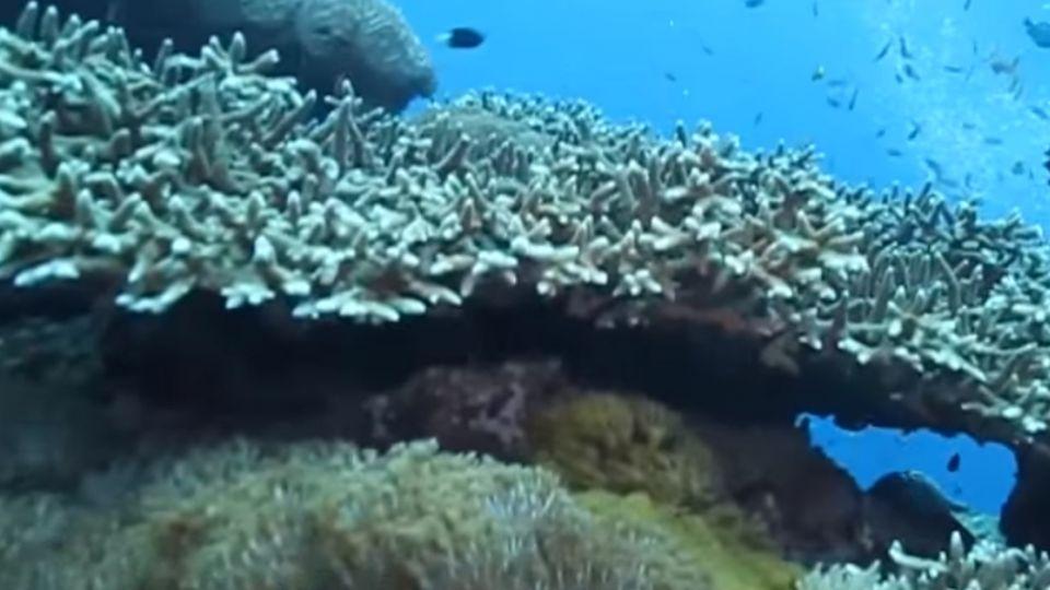 綠島「大香菇」不敵風災 呈現45度角傾斜