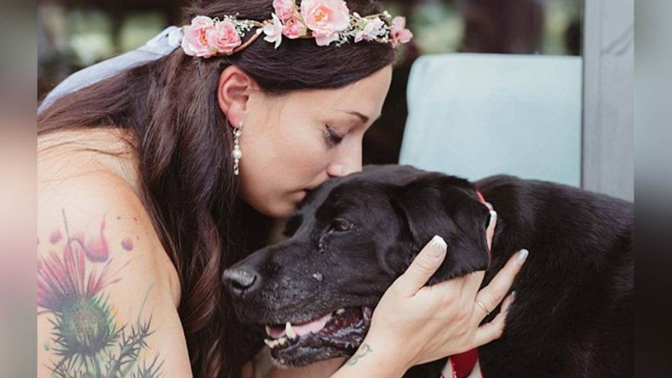 15年愛犬罹癌硬撐 看完主人結婚後才「笑著離開」