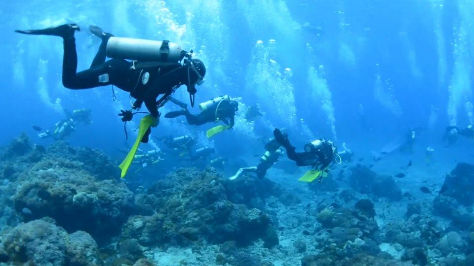 「海底捕夢網」破了!蘭嶼大海扇變 「濟公破扇」