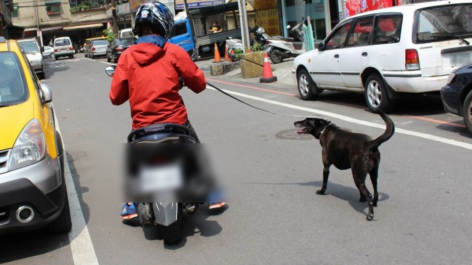 騎機車遛狗、獨留貓犬在車內 未來最重罰「1萬元」