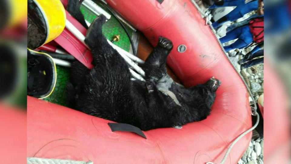 慟!台灣黑熊死在河床 腳掌疑遭捕獸夾斷傷痕累累