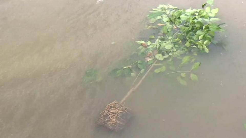 梅姬14:00花蓮登陸 50年大樹倒 冰箱「離家出走」