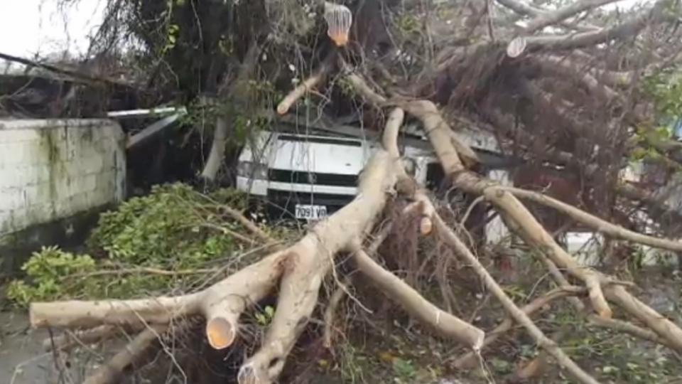 花蓮災情慘 樹倒、路積水 交通中斷如孤島