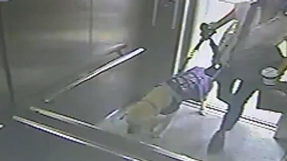 女師帶導盲犬搭火車 四站務員接力轉乘