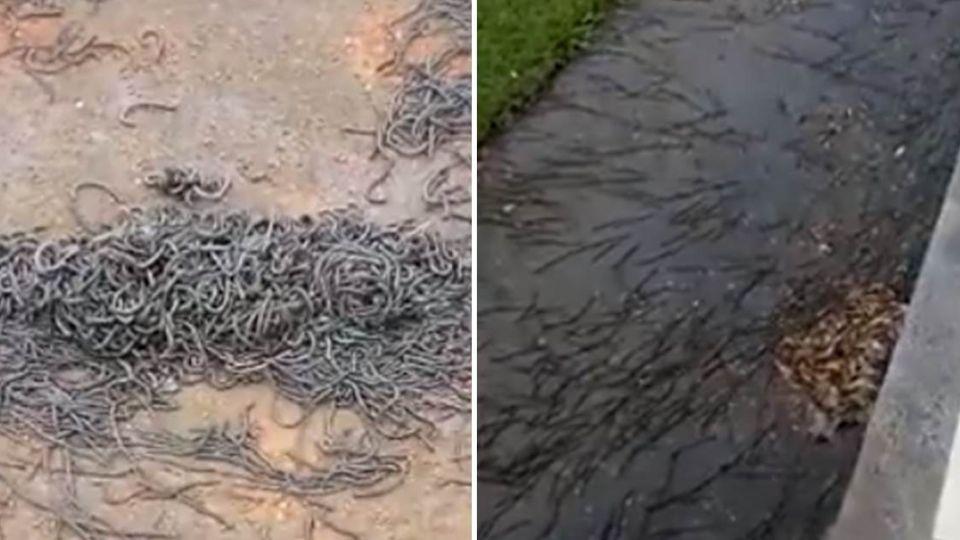 花蓮大批蚯蚓湧現 15小時後…東海真的發生地震了