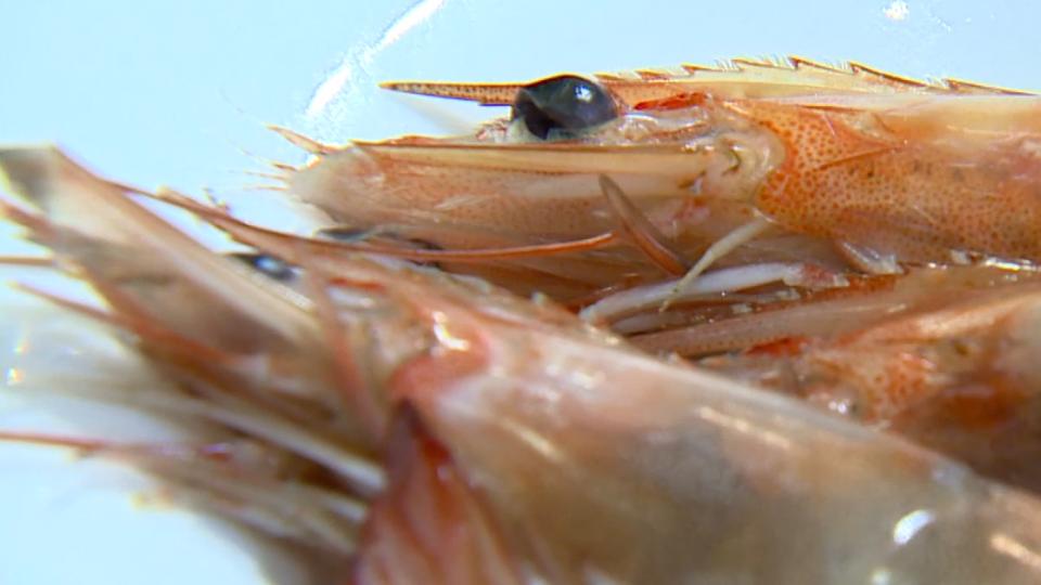 蝦肉「粉粉」因添加藥物? 業者:和新鮮有關