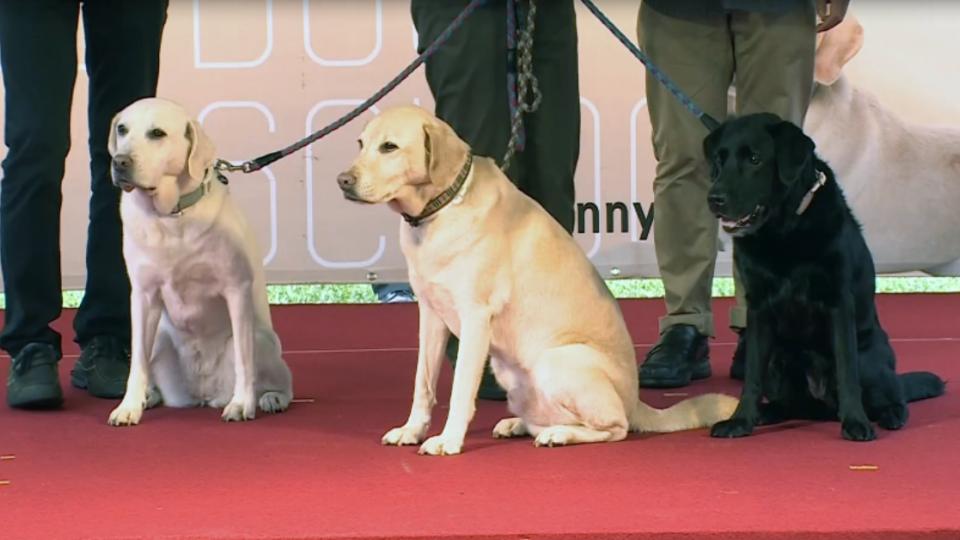 蔡總統收養三隻退休導盲犬 狗暴衝英險跌倒