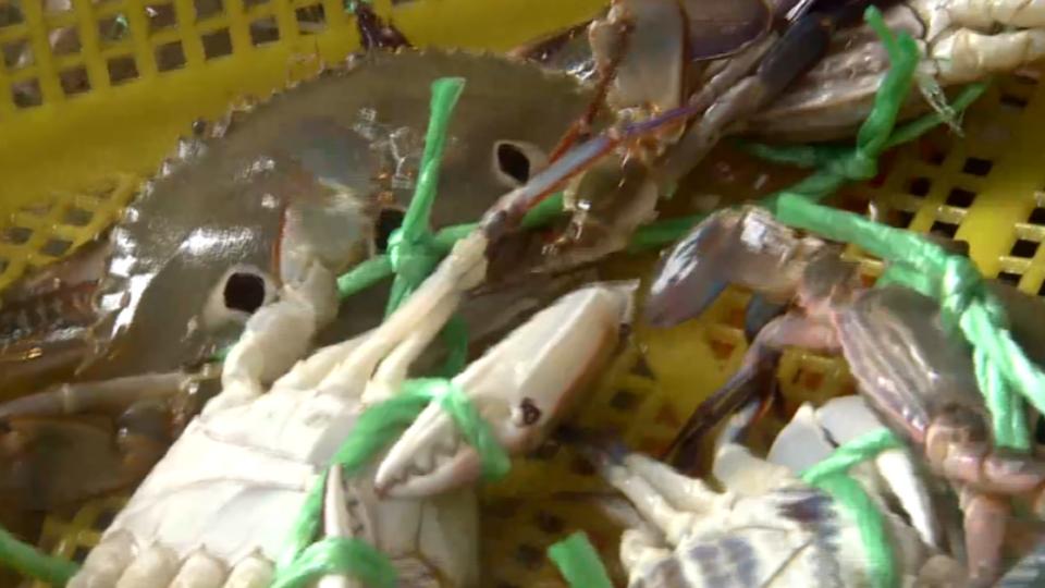 三小時搶光!萬里蟹產量不足 業績掉一半