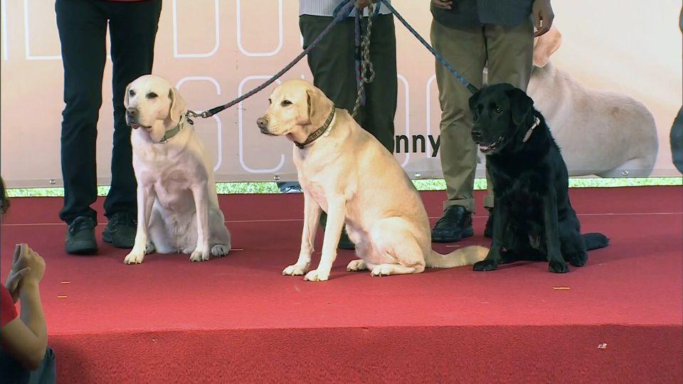 蔡英文養3隻退休導盲犬 狗爆衝英險跌倒