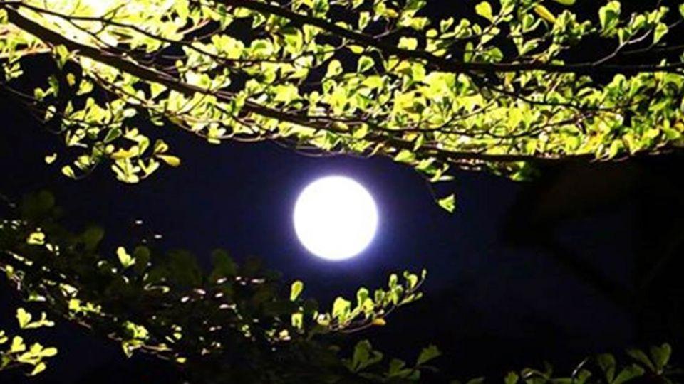 快出門賞月!16日逢大滿月 鄭明典:有超級月亮!
