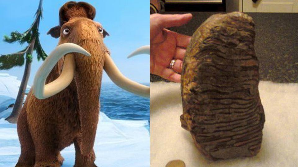 找到「蠻尼」的牙齒了!初估至少300萬年歷史