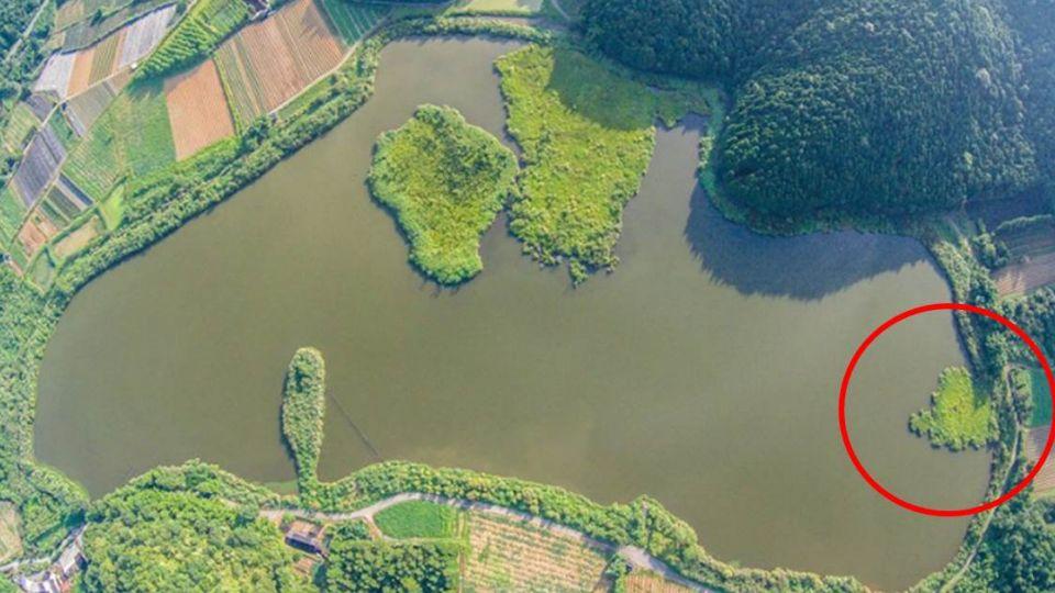團圓了!宜蘭雙連埤「浮島」飄移200公尺 500年奇景在台灣