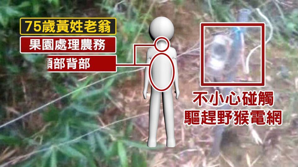 老翁疑摔落果園 遭驅趕野猴電網致命