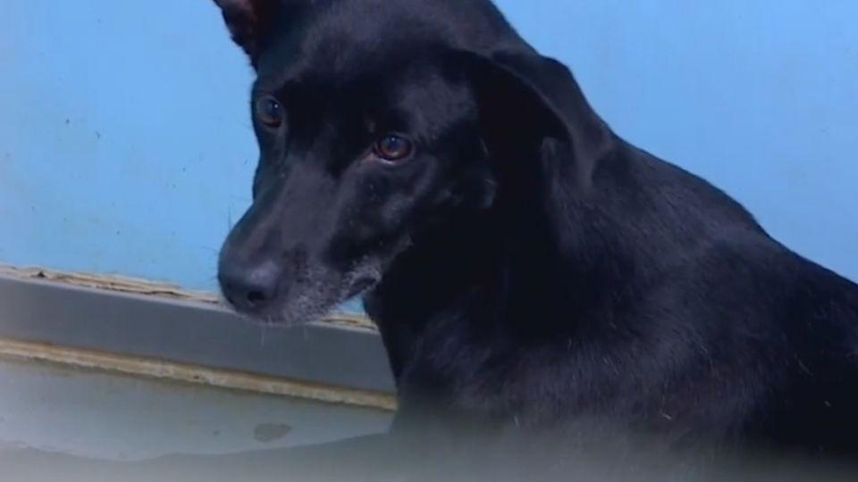 訓練犬隻聽「哨音」獵貓? 動保處逮1人6狗調查中