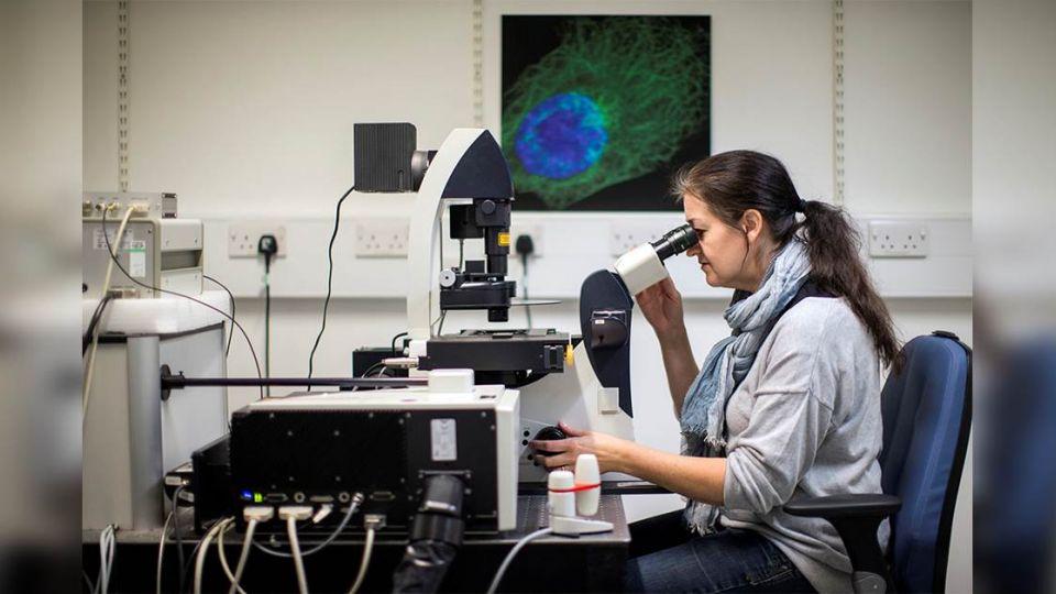 【端傳媒】新分子能有效阻止四分之一癌症類型生長,「廣譜抗癌藥」將誕生?
