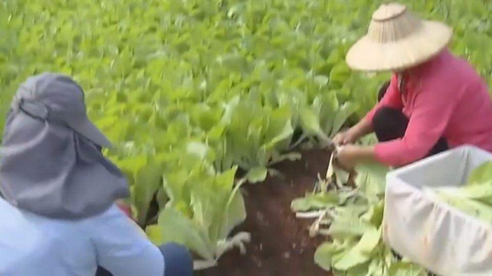 首屆「台灣國際蔬果展」 精緻農業技術優良