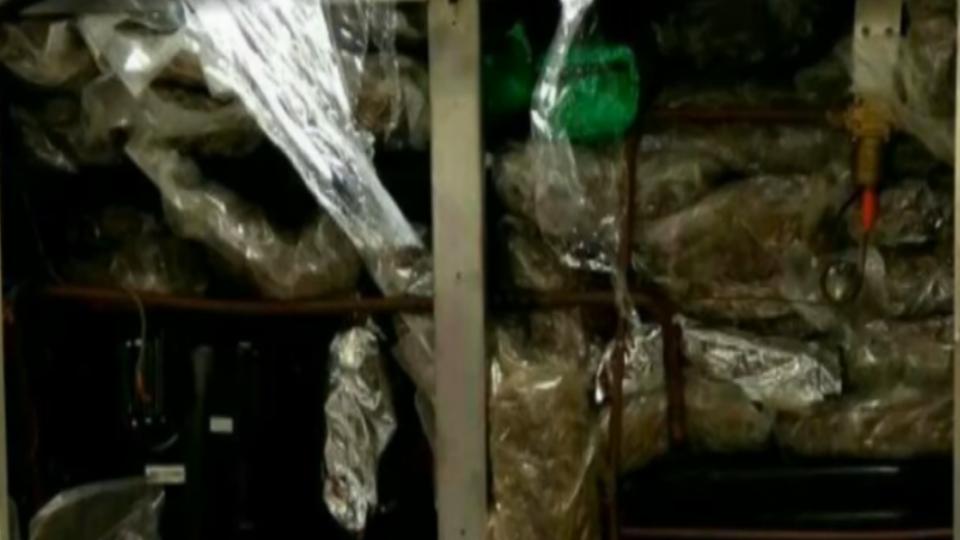 破近年最大宗大麻花案 黑市價粗估達1.3億