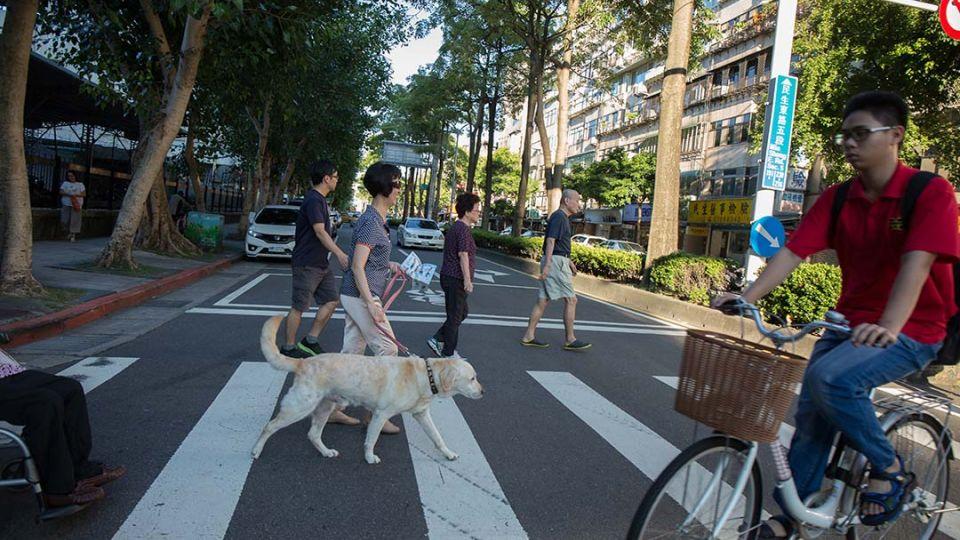 【端傳媒】導盲犬是怎麼練成的(上):出生、寄養、紅背心